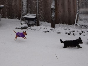 Doggy winter fun- photograph by Erin4