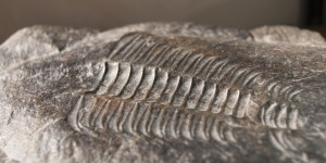 Hunting the Past in West Virginia: Where to Find Fossils