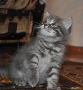 kitten-1356807713Nb5
