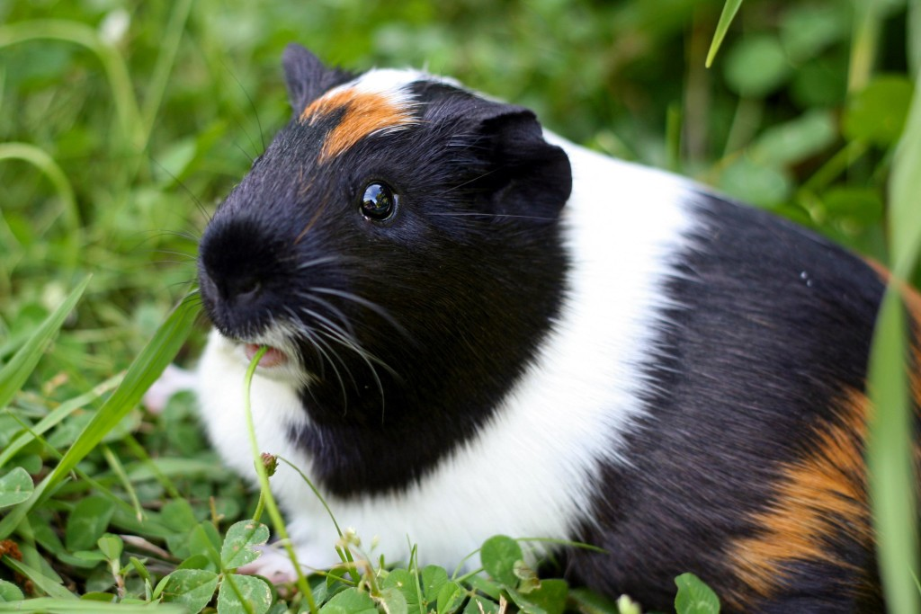 Could a Rodent Be the Right Pet For You?