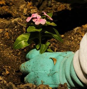 Plant seedlings (image: Pixabay.com)
