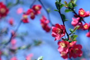 Spring Flowers  (image: freestockphotos.biz)