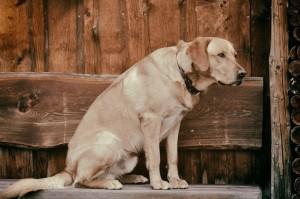 dog-656224_1280