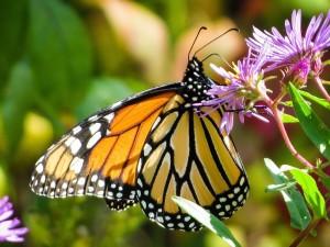 butterfly-744783_1280