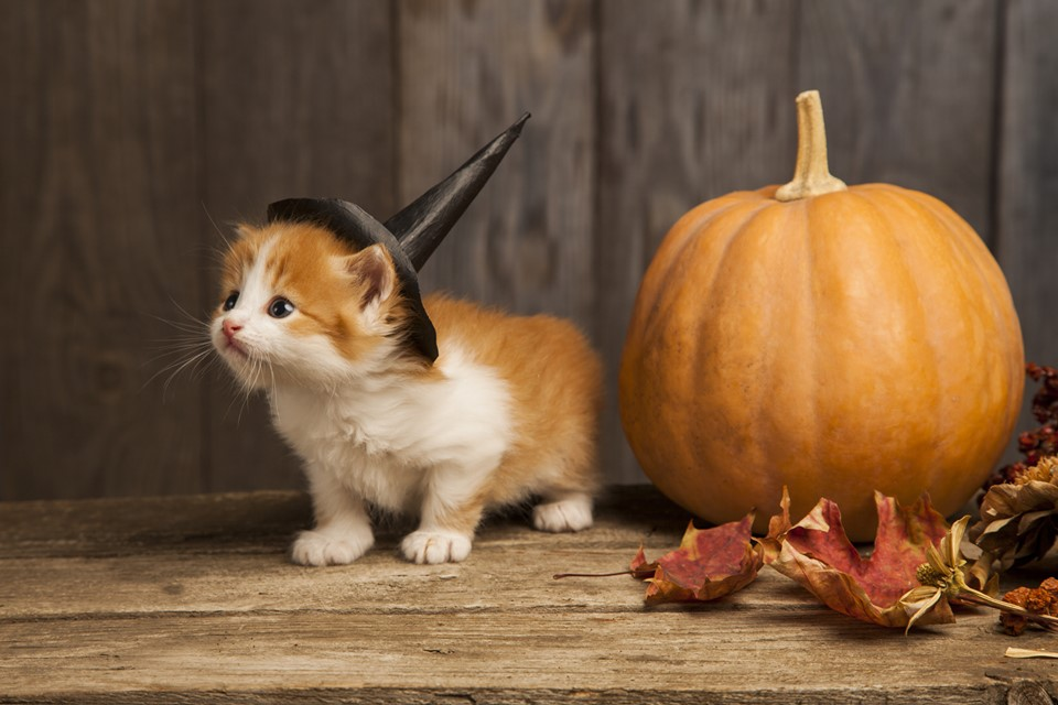 Treats, Pumpkins, and Fall Festival Happenings